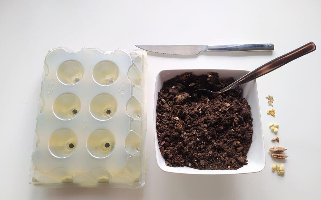 Crea Reciclando: Semillero